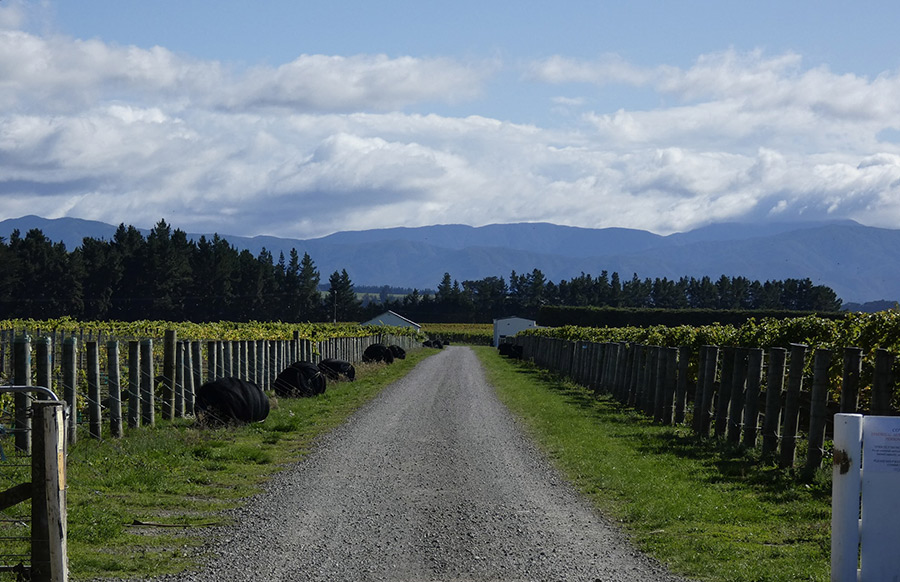 Palliser Vineyard Walk, Martinborough – 50 minute loop